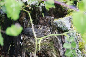 Ett litet fågelbo på landet