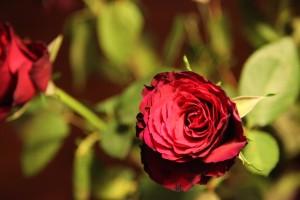 Fusk ros